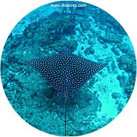 multiple diving excursions