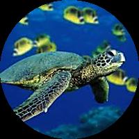 Snorkel Rental