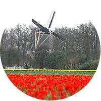Flower Time in Tulip Land - The Keukenhof Flower Exhibition