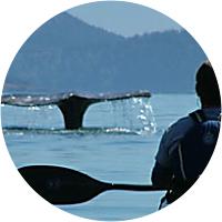 Mini-moon: Kayak Tour