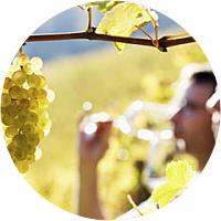 Wine Tasting in Cotes du Rhone