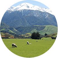 Sheep Farmstay