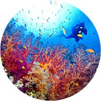 Tour to Exuma Cays Land and Sea Park