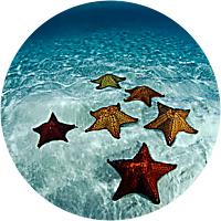 Trip to Starfish Reserve
