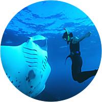 Night snorkel with Manta Rays
