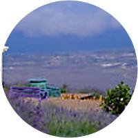 Small-Group Maui Tour: Haleakala National Park, Lavender Farm and Wine Tasting