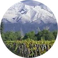 Chile Wine Bike Tour!