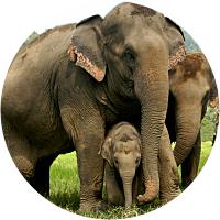 Overnight Visit to Elephant Nature Park