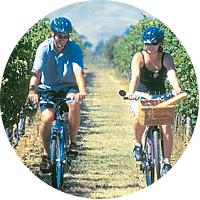 Bike Tour through New Zealand's Wine Country