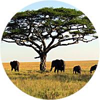 Elephant Safari!!