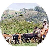 Piiholo Ranch Horseback Riding Tour