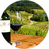 Vineyard Picnic Tour