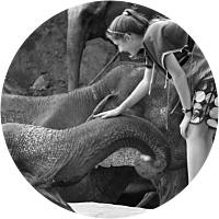 An Elephant Adventure!