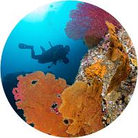 Sea of Cortez Discover Scuba Diving