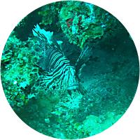 Cenote & Ocean Scuba Diving