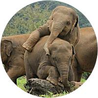 7-Day Elephant Experience