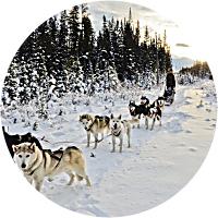 Alaska: Dog Sledding Adventure