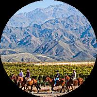 Horse & Wine Tour