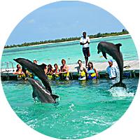 Punta Cana dolphin adventure