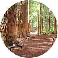 Rotorua Redwoods adventure