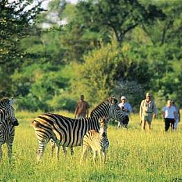 Walking Safari