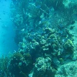 Shark & Ray Snorkel Safari