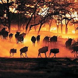 Sunset over the Serengeti