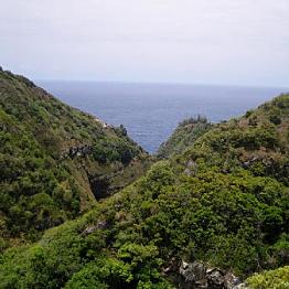 Guided hike through Maui
