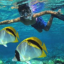 SeaFun Kauai Snorkel Tour