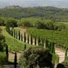 Wine tours & tasting