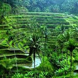 Daytrip in Bali