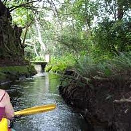 Kayak Cruise through a Hawaiian rainforest!!