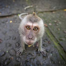Visit to the Monkey Sanctuary
