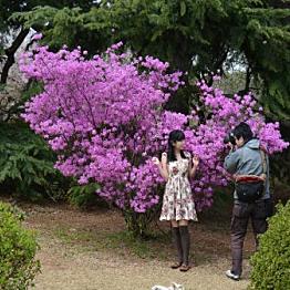 Visit to Shinjuku Gyoen National Garden