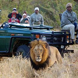 Safari at Kapama Reserve