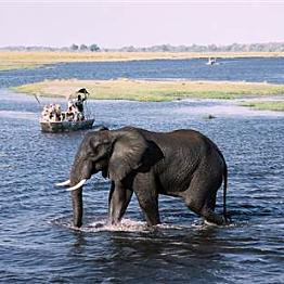 Chobe River Safari