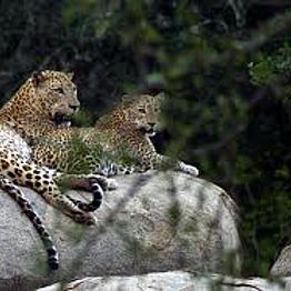 Two night safari in Yala National Park