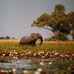 Entry fee to Okavango Delta National Park
