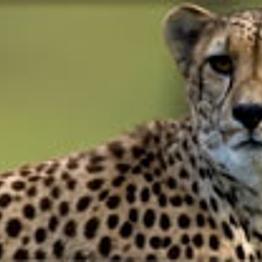 Zoo Safari - Cats and Critters