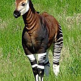 Zoo Safari - Jungle Journey