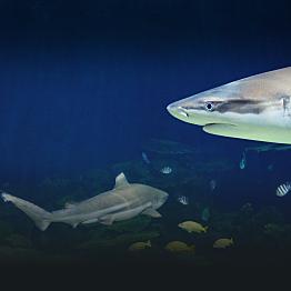 Tickets to Vancouver Aquarium