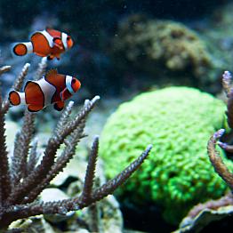 Finding Nemo at the Boston Aquarium