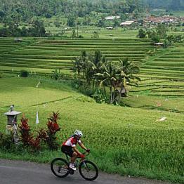 Cycling through Rice Paddies