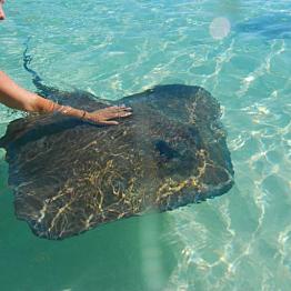 Stingray Encounter at Gibbs Cay