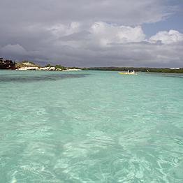 Glass-Bottom Kayak and Eco Safari