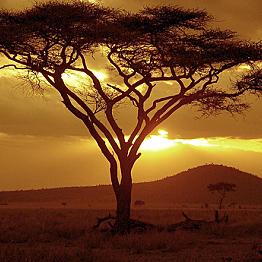 Evening Walk with Maasai Guides