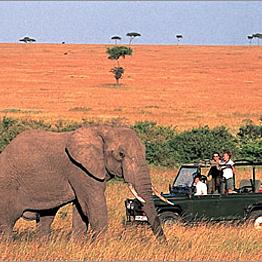 Morning Game Drives While On Safari