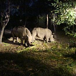 Night Game Drives on Safari