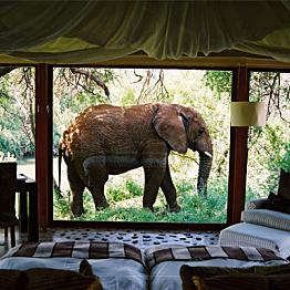 Lodging at the safari lodge