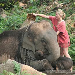Day at the Patara Elephant Farm